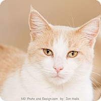 Adopt A Pet :: Ivanna - Fountain Hills, AZ