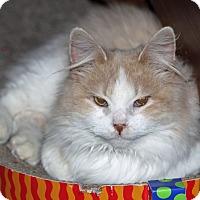 Adopt A Pet :: Mozart - Hillsboro, IL