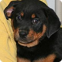 Adopt A Pet :: Herman - Saratoga, NY
