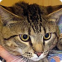 Adopt A Pet :: 287348 - Wildomar, CA