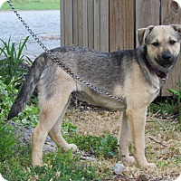 Adopt A Pet :: HEATHER - Bedminster, NJ