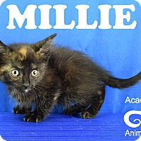 Adopt A Pet :: Millie - Carencro, LA