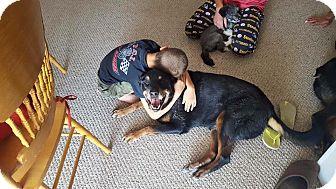 Rottweiler Mix Dog for adoption in Las Vegas, Nevada - Sasha