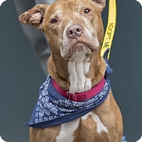 Adopt A Pet :: Angel Face - Brooklyn, NY