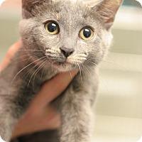 Adopt A Pet :: Rockette - Staunton, VA