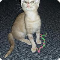 Adopt A Pet :: Jessica - Sarasota, FL