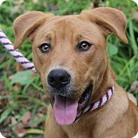 Adopt A Pet :: SANDY - Red Bluff, CA