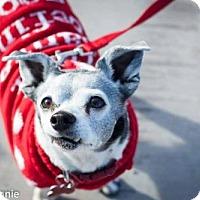 Adopt A Pet :: Jack - Tucson, AZ