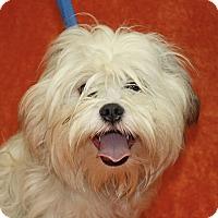Adopt A Pet :: Raphael - Jackson, MI