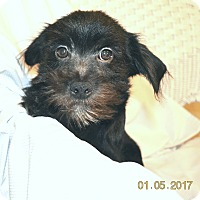 Adopt A Pet :: Twin Adopted! - Brattleboro, VT