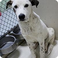 Adopt A Pet :: A28 Pittsburg - Odessa, TX