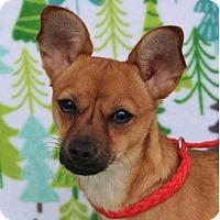 Adopt A Pet :: HEIDI - Red Bluff, CA