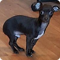 Adopt A Pet :: Earnhardt - Baileyton, AL