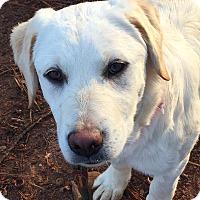 Adopt A Pet :: Serena - CUMMING, GA
