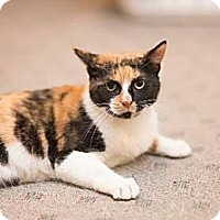 Adopt A Pet :: Calista - Baltimore, MD