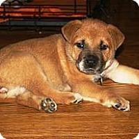 Adopt A Pet :: Squirt - Marietta, GA