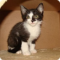 Adopt A Pet :: Harley - Spotsylvania, VA
