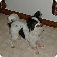 Adopt A Pet :: Austin (bs) - Brattleboro, VT