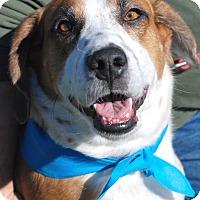Adopt A Pet :: Wilson - Marietta, GA