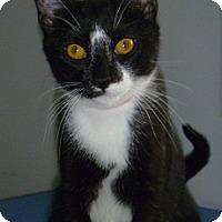 Adopt A Pet :: Shea - Hamburg, NY