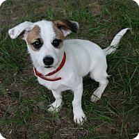 Adopt A Pet :: Scamp - Lufkin, TX