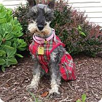 Adopt A Pet :: Junebug - Sharonville, OH