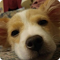 Adopt A Pet :: Teddy - Bardonia, NY