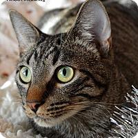 Adopt A Pet :: Baxter - Little Rock, AR