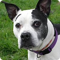 Adopt A Pet :: Scooter - Strongsville, OH