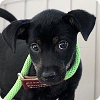 Adopt A Pet :: Harmony - Locust Fork, AL