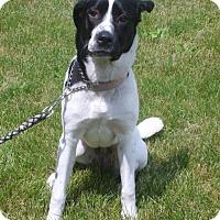 Adopt A Pet :: Maddie - Bellbrook, OH