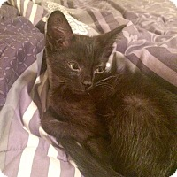 Adopt A Pet :: Plankton - Gainesville, FL