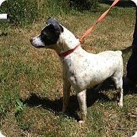 Adopt A Pet :: Samantha - Kendall, NY
