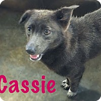 Adopt A Pet :: Cassie - Fort Wayne, IN