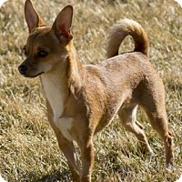 Adopt A Pet :: Chloe - Wichita, KS