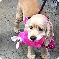 Adopt A Pet :: Penny-ADOPTION PENDING - Sacramento, CA