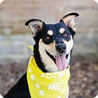 Adopt A Pet :: Waverly - Salt Lake City, UT