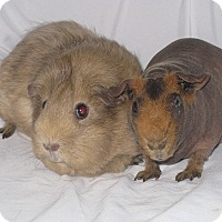 Adopt A Pet :: Shelly & Jake - Monrovia, MD