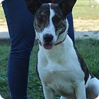 Adopt A Pet :: Sandra - Waldorf, MD