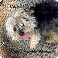 Adopt A Pet :: Franklikn - LE MESA, CA