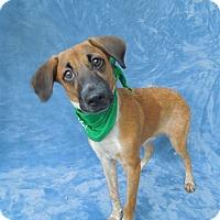 Adopt A Pet :: Redington - Charlotte, NC