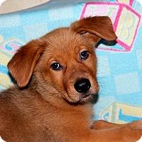 Adopt A Pet :: Gurgle - Los Angeles, CA