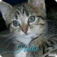 Adopt A Pet :: Hattie - Cincinnati, OH
