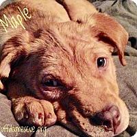 Adopt A Pet :: Maple - Milton, GA