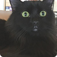 Adopt A Pet :: Zisa-fostered - Rustburg, VA