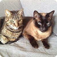Adopt A Pet :: Caligula & Gaia - Harrison, NY
