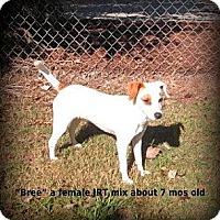 Adopt A Pet :: Bree - Gadsden, AL