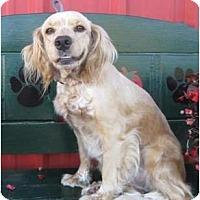 Adopt A Pet :: Maudie - Sugarland, TX