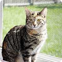 Adopt A Pet :: Alicia - Xenia, OH
