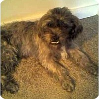 Adopt A Pet :: Oscar - Scottsdale, AZ